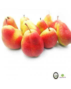South Africa Forelle Pear (L Size)